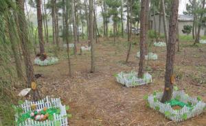 兽医专业美女大学生卖陪嫁房建武汉首家宠物公墓,盼纳入监管