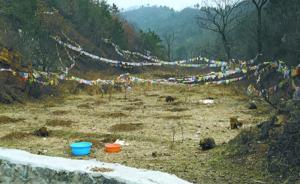 数百只养殖狐狸和貉被放生北京怀柔山,数十只被捕获近半死亡