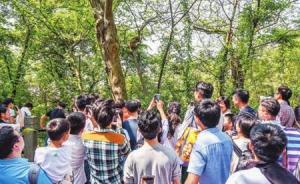 一只外来猴子出没于上海佘山圣母大殿一带,喜与人亲近
