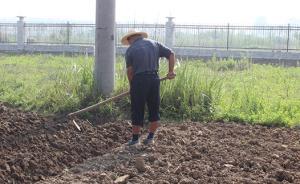 河南固始集聚区:企业圈数百亩良田未建,被征地农民墙外垦荒