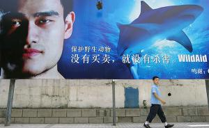 美媒称姚明协助减少中国鱼翅消费量:年轻中产以吃鱼翅为耻