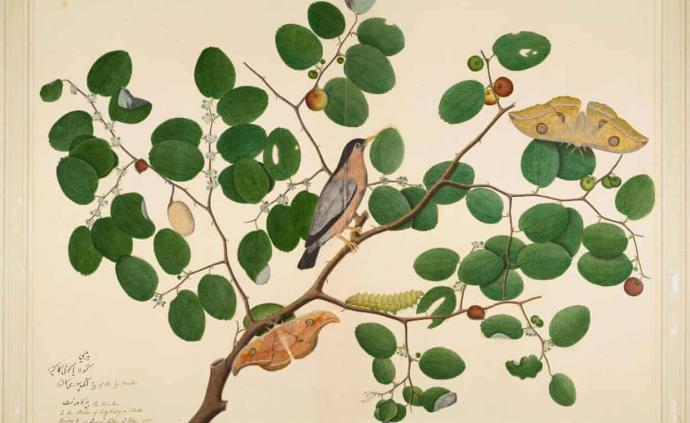 掠奪時代下的印度插畫,那些生動而明亮的果蝠、松鼠