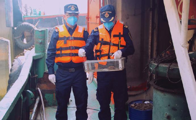 佛山海关驻顺德办事处在入境船舶上截获携带汉坦病毒的活鼠