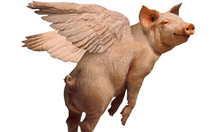 """猪肉那些事︱本轮猪价上涨是不是""""猪周期""""?"""