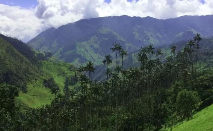 官宣!2020世界環境日花落哥倫比亞