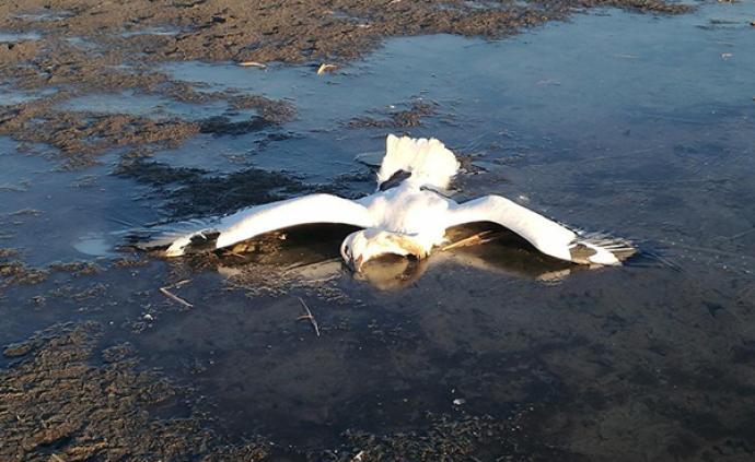 天津現野生鳥類集中死亡事件,警方:多只鳥體內檢出農藥成分