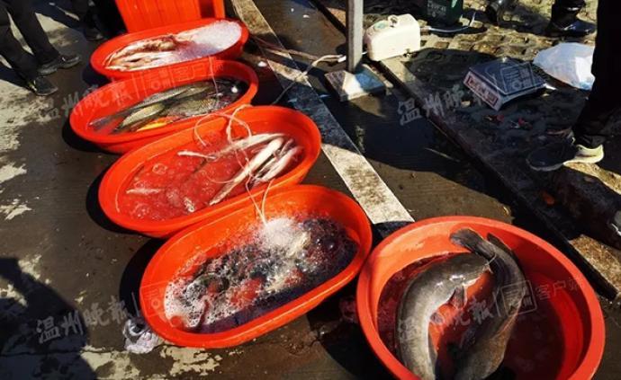 不良商販往水里加柴油,快死的魚又活蹦亂跳