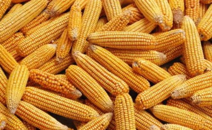 國家糧食和物資儲備局:安排投放部分政策性玉米