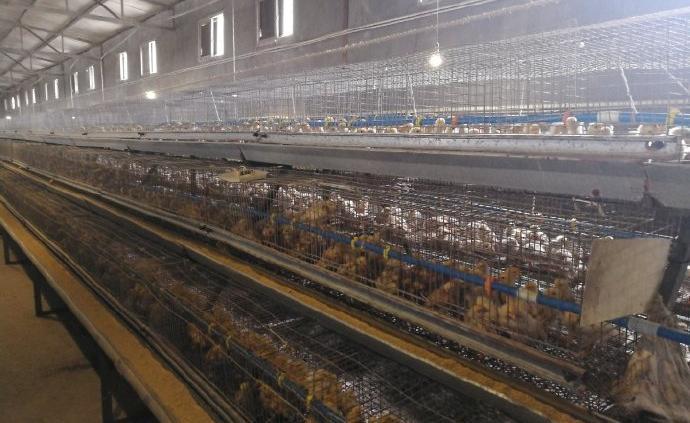 """中粮集团11万吨玉米驰援湖北,缓解养殖场""""断粮""""压力"""