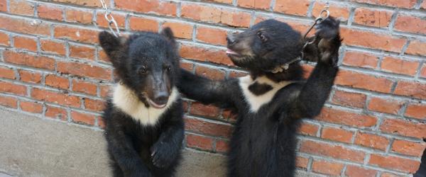 """安徽宿州马戏行业被指虐待动物,监管部门称""""表演需要训练"""""""