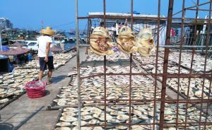 海南四市县南海休渔期违规偷捕,相关负责人被约谈