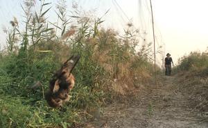 """天津、唐山均现万米""""网海"""",志愿者称发现挂网死鸟五千余只"""