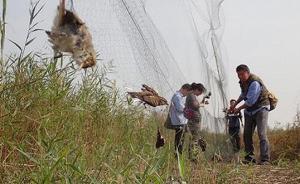 国家林业局督导组赴津冀现场督导野生候鸟迁徙保护工作