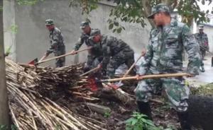 视频|毒蛇养殖场和一河之隔的村庄,地毯式搜索仍在进行中