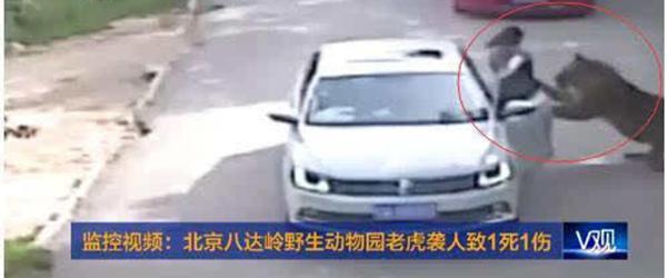 北京老虎咬人事件家属回应索赔200万:发声为公平,将起诉