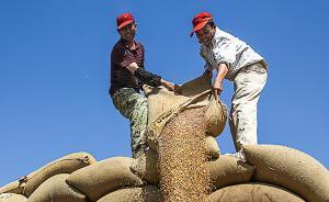 陈锡文:应对中国粮食的三量齐增怪像,让市场发挥决定性作用