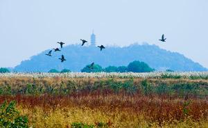 长江经济带湿地生态不堪重负:重开发轻保护,重索取轻投入