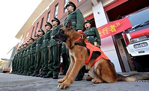 早安,全世界都在看↑消防战士不舍搜救犬,被获准一起退伍