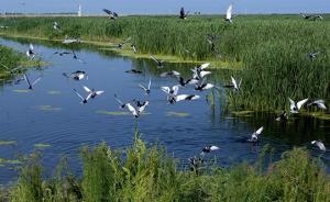 """国家林业局局长:""""十三五""""可新增湿地面积300万亩"""