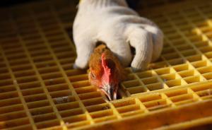 浙江H7N9流感进入发病高峰期,活禽接触为主要感染源