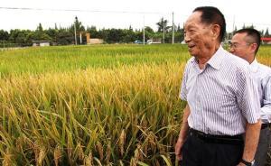 袁隆平:计划三年内获得亩产突破300公斤的海水杂交稻品种