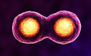 人猪嵌合体胚胎培育成功:人类干细胞注入猪胚胎,伦理争议大
