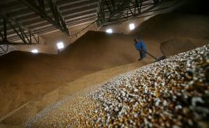 韩俊:玉米收储制度改革是农业供给侧结构性改革的首场硬仗