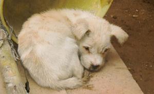 四川眉山孕妇被宠物狗咬后患狂犬病死亡,当地大面积打狗