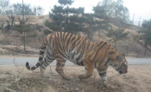 北京八达岭动物园女游客遭老虎攻击致1死1伤,系自驾游