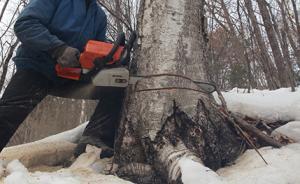 """福建检察首创""""补植复绿""""机制,7年办破坏森林资源案超千件"""