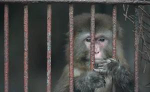 """重庆""""一个人的动物园""""已停业整顿,大量私人动物园或被淘汰"""