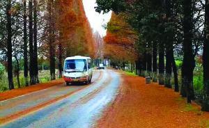 """黄山""""最美公路""""行道树被砍,官方:道路拓宽后会复植"""