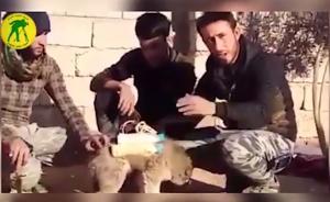 """2017年2月27日,伊拉克,""""伊斯兰国""""武装分子给一只狗狗穿上炸弹背心,想让其穿过前线进入敌方阵地。最后,狗狗身上的炸弹被一名政府军的军人给拆除了。东方IC 图"""