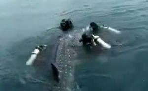 """海南""""鲸鲨事件""""涉事景区否认买卖商演,称急于救助程序欠妥"""