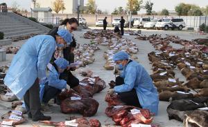 甘陕警方破获非法猎捕贩卖野生动物案,千只野生动物被猎杀