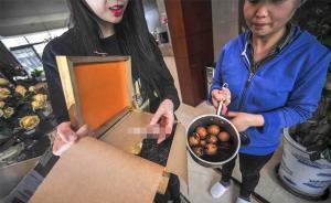 上海一市民拍下孤品茶却被保姆煮了茶叶蛋:这盆蛋起码值四千