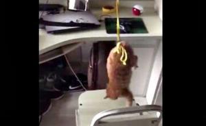 四川一高校学生在宿舍拍虐猫视频,校方:依校规校纪严肃处理