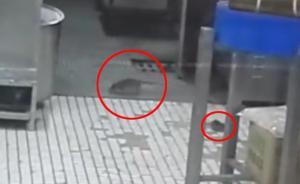上海南京东路沈大成餐厅老鼠出没,市场监管局:3月刚灭鼠