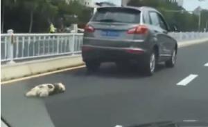 """山东威海一男子开车拖行小狗遭""""人肉"""",警方:正在调查"""