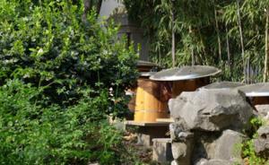 杭州别墅业主养蜜蜂扰邻近十年:多部门管不了,蜂业协会接收
