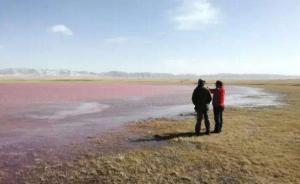 """青海湖""""变红""""附属湖泊水体恢复正常:排除工业污染"""