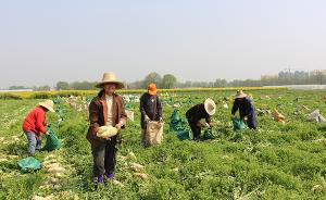 家庭农场要破解新问题:农场户需要一种更强烈的企业家精神