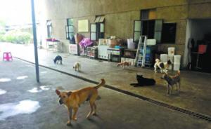夫妻卖深圳两套房救助百余流浪狗,屡遭投诉目前又被责令搬走