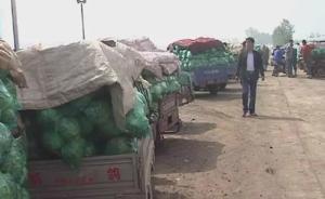 河南卫辉三千万斤包菜滞销两三分钱一斤,网友政府接力助菜农
