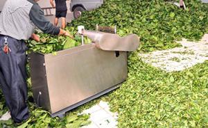 天猫买万余元桑叶茶厂名厂址均假冒,厂家被判10倍赔偿
