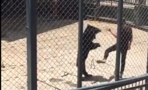 马上评|狗熊被踹事件:你看到的不是动物表演,是虐待动物