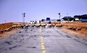 藏羚羊迁徙季来了:日行10至20公里,森林公安保驾护航