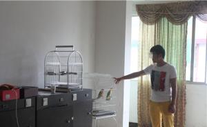 成都小伙收购9只鹦鹉,被判3年缓刑5年并罚款3万元