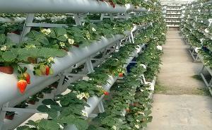 中办国办出台意见:加快构建政策体系,培育新型农业经营主体