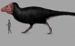 """多亏世上仅有的皮肤化石,霸王龙是不是""""毛茸茸""""的有了定论"""